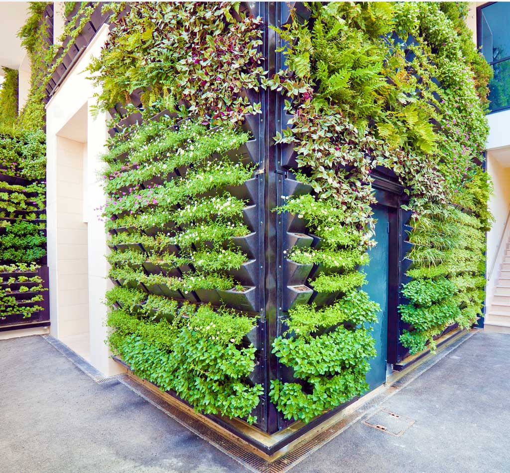 Plant wall at The Central